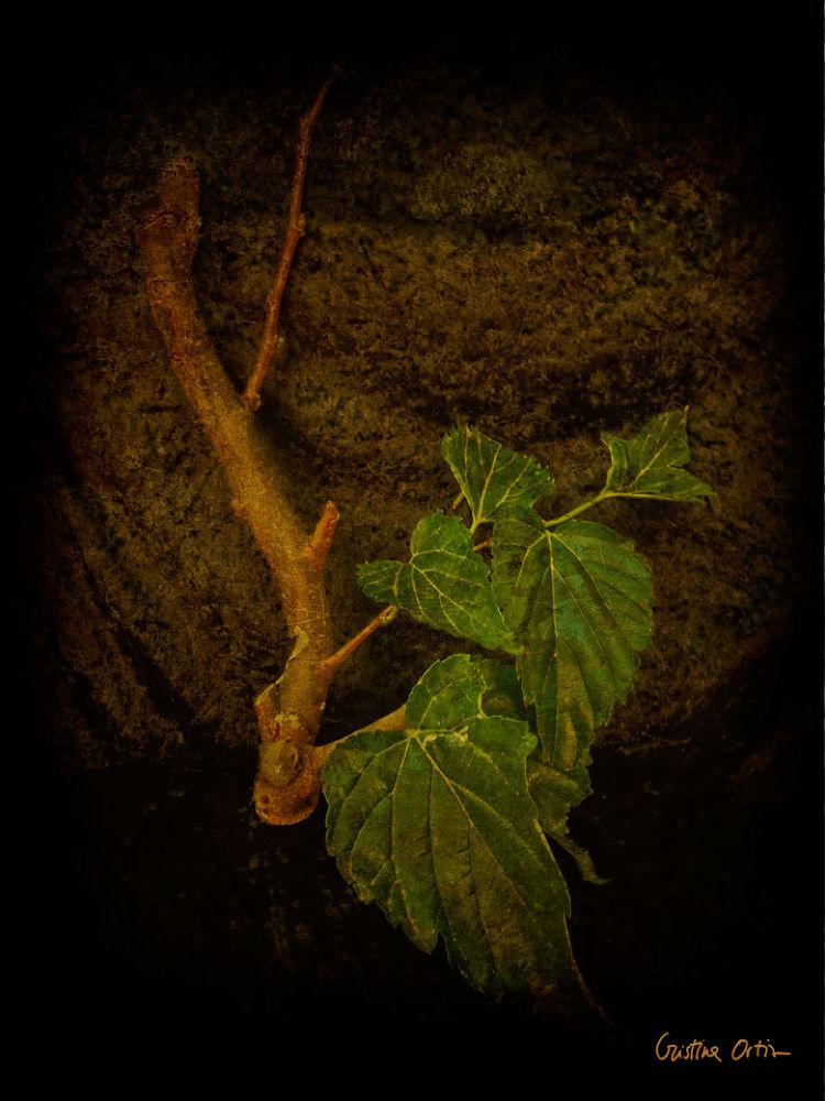 VANITAS-TREE-1 by CristinaOrtiz