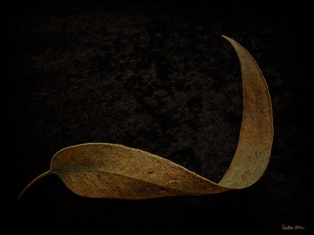 LEAVES III by CristinaOrtiz