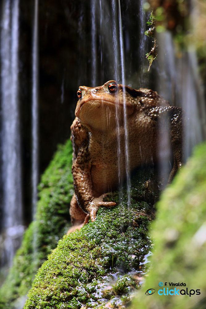 Wet Frog by VivaldaFabio