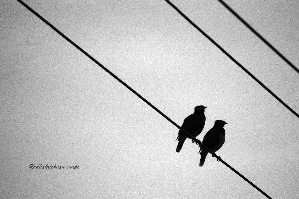 We Two  by Radhakrishnan. AG
