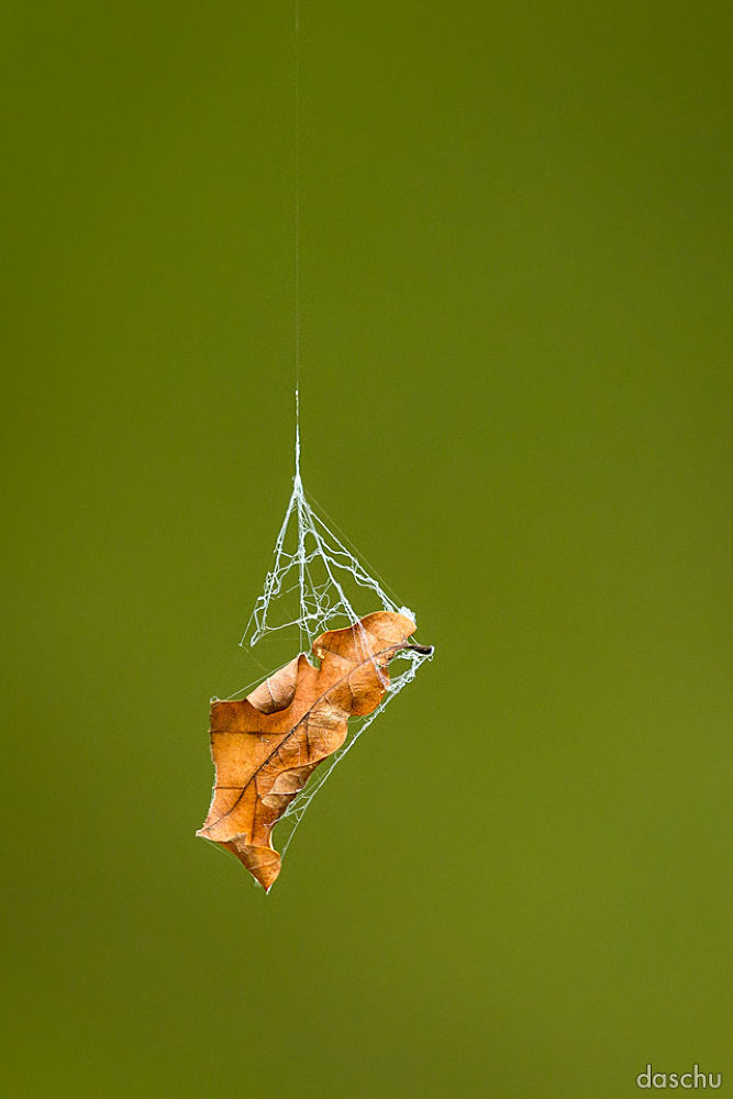 Photo in Landscape #fallen #leaf #blatt #laub #spider #web #spinnenweben #spinne #autumn #fall #herbst #orange