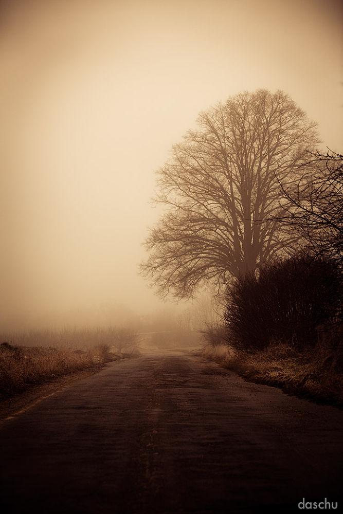 hot fog by daschu