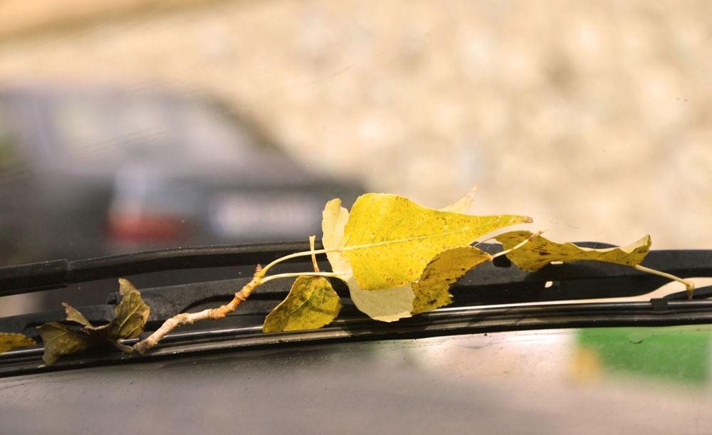 Driving in Autumn by Abolfazl
