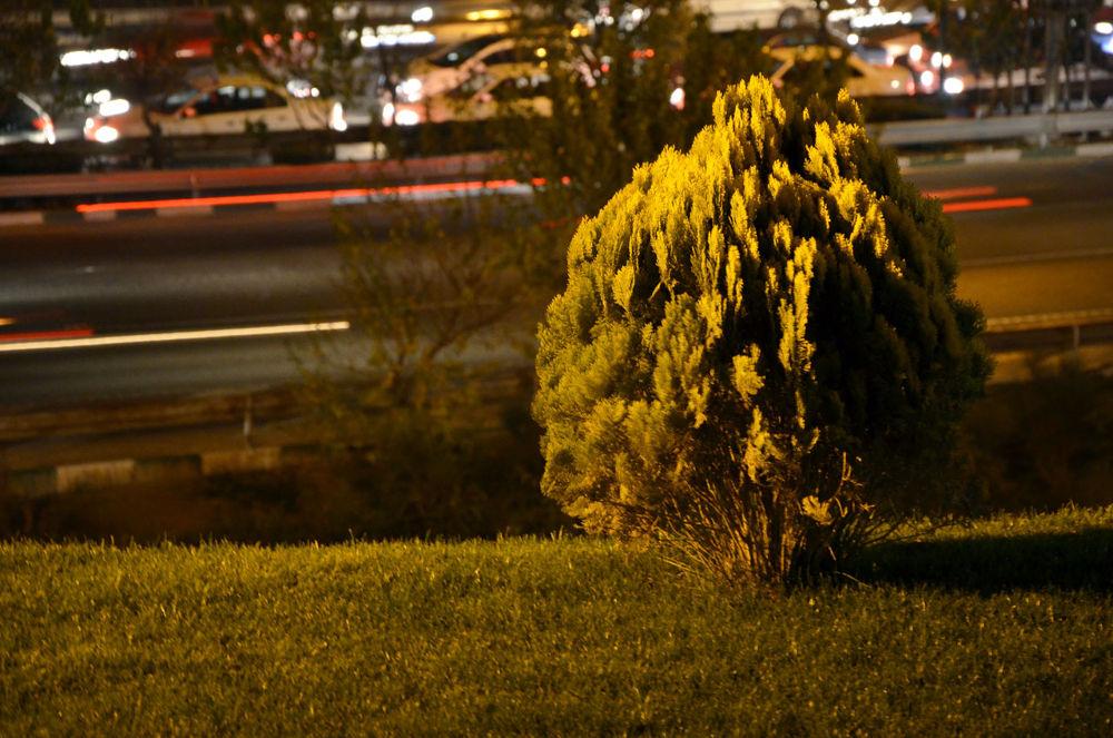 Photo in Nature #tree #grass #light #cars #alone #night
