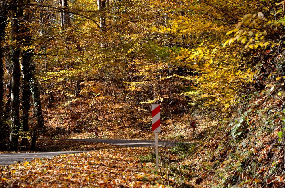 Forest Road by Abolfazl