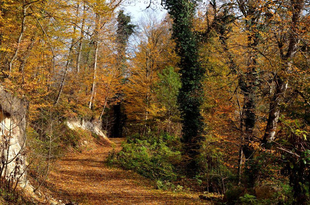 Leafy Ground by Abolfazl