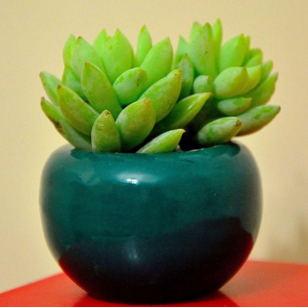 My Cute Cactus by Abolfazl