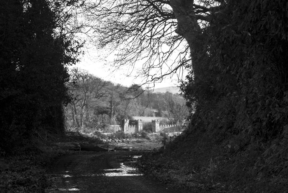 Entrance to Narrow water by andyhiggs2