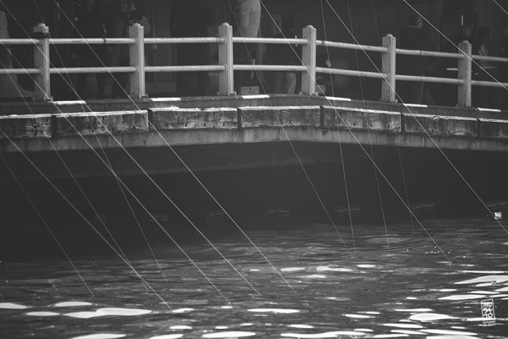 fishing lines by Musato