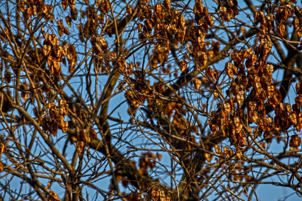 Autumn by maradesign