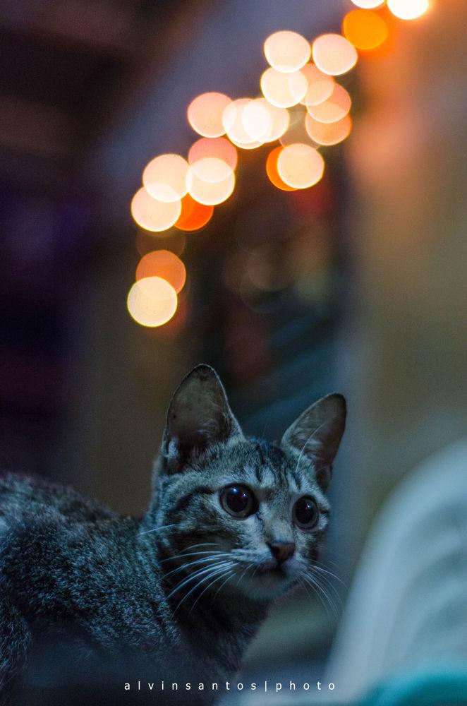 Photo in Random #cat #night