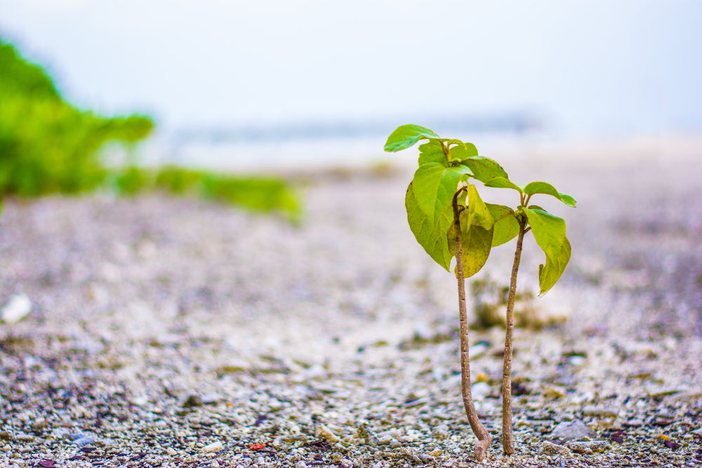 plant by Iyaz's Photography