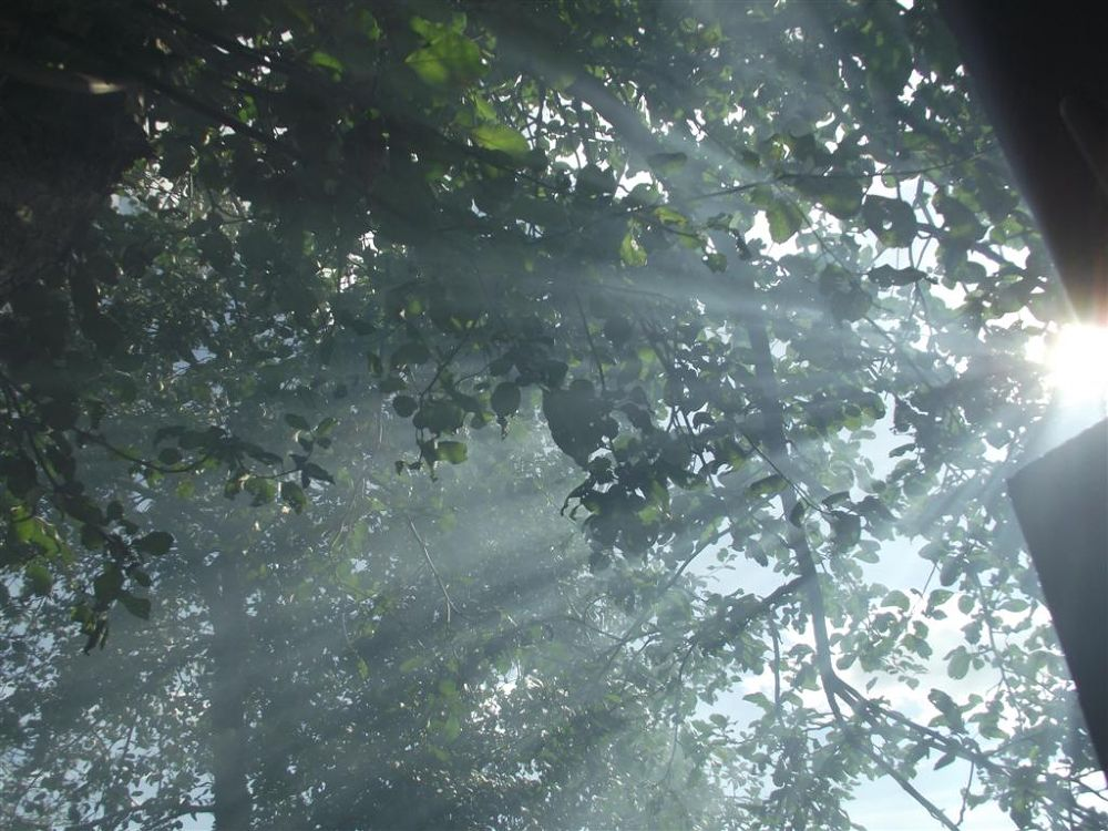 Sun rays in russian forest by lubov panarina
