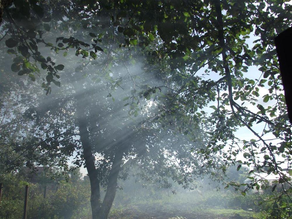 Rays of sun in russian apple garden by lubov panarina