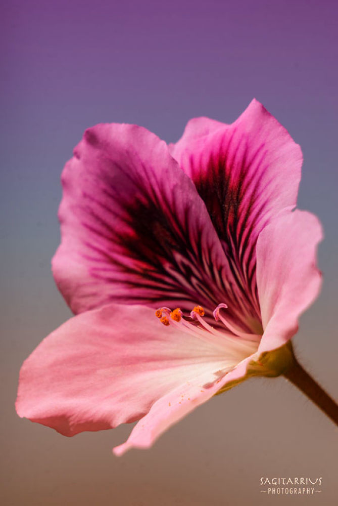 flower by aroraveloson