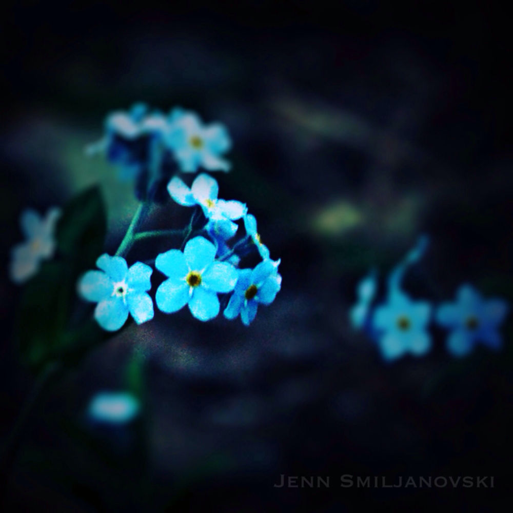 IMG_3887 by JennS