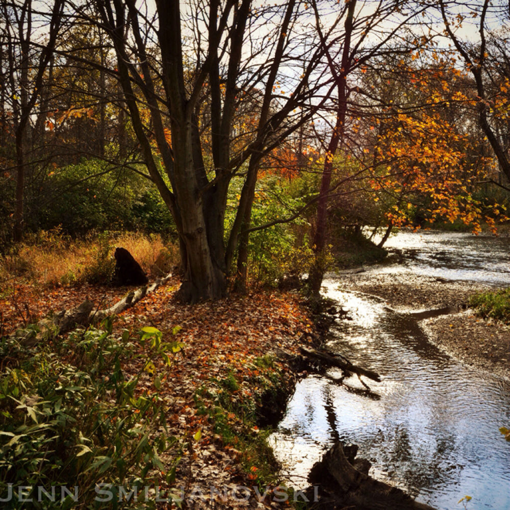 IMG_3898 by JennS