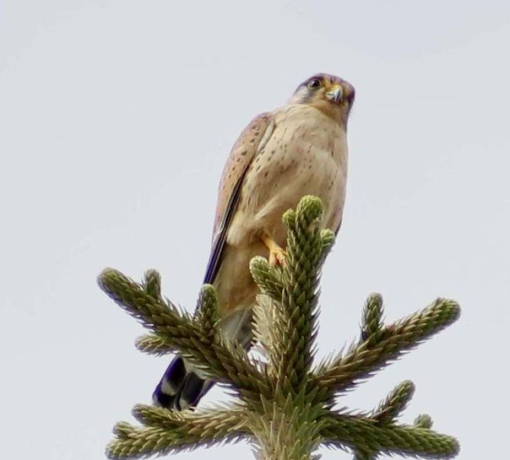 Kestral took this one on Holiday at Fuertevetura. by sidoneill1