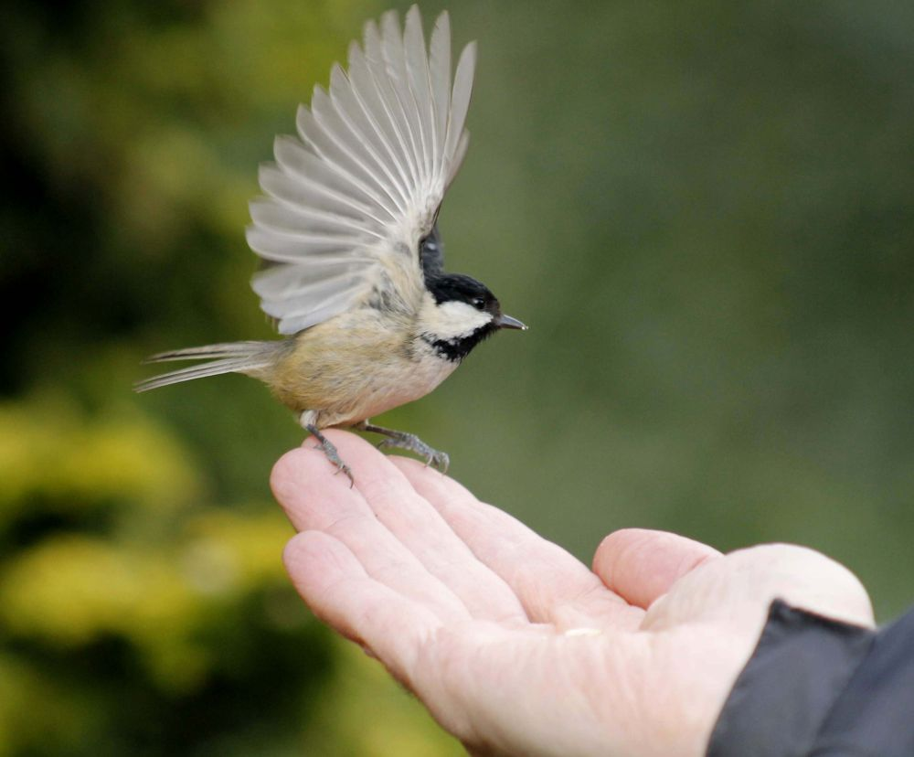 A cool Tit on his hand. by sidoneill1