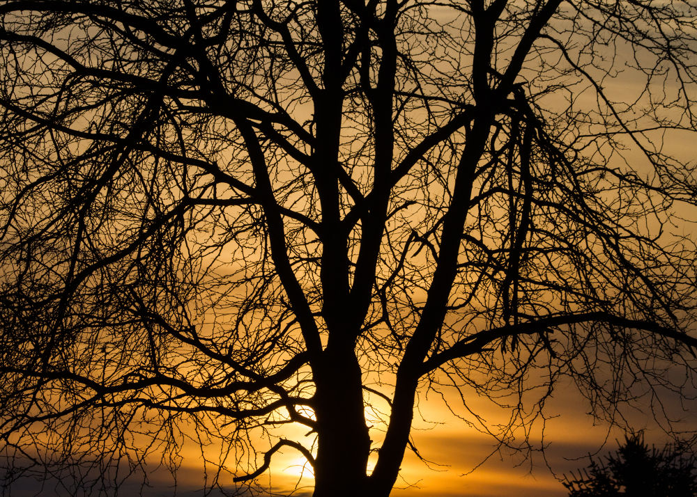 Sunset Through The Trees 2-19-2014 by tomminutolo