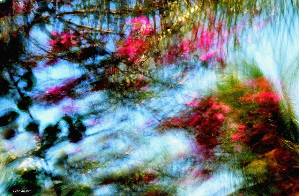 flowers by CeliaAnahin