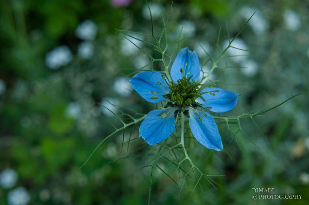 Photo in Nature #flower #nature