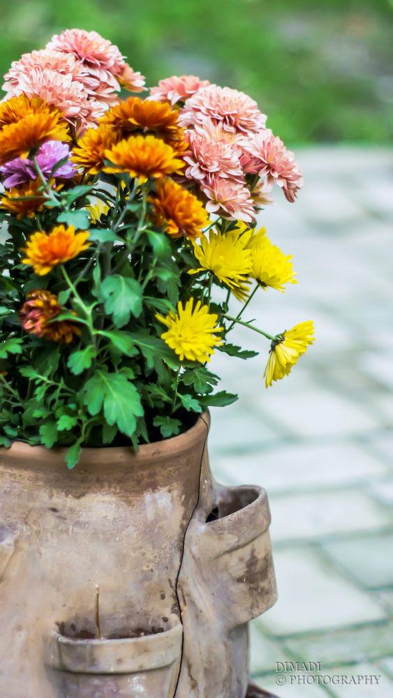 Flowers by dimadi
