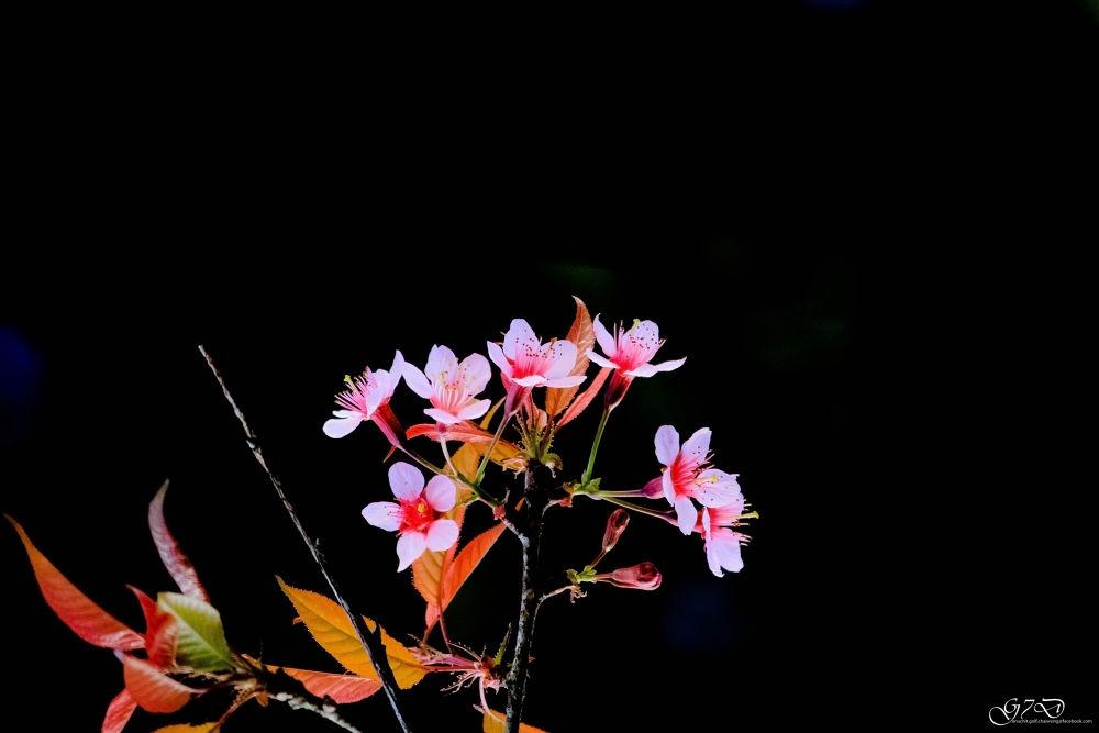 IMG_0556 1 by anuchit chaiwong