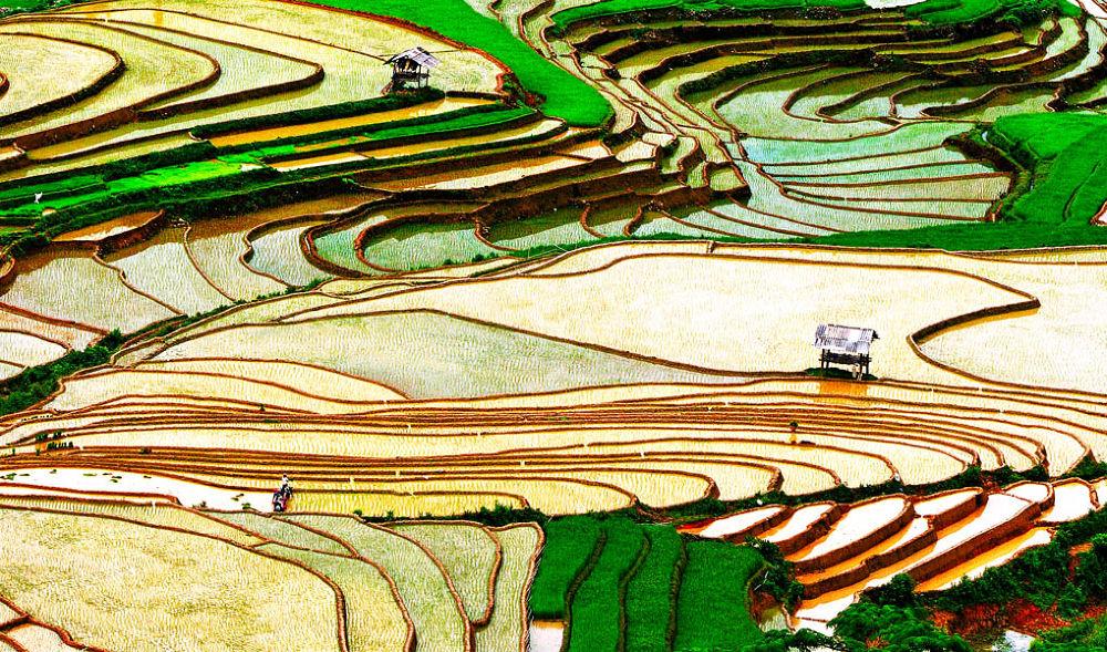 Repiquage de riz! by loctran0005