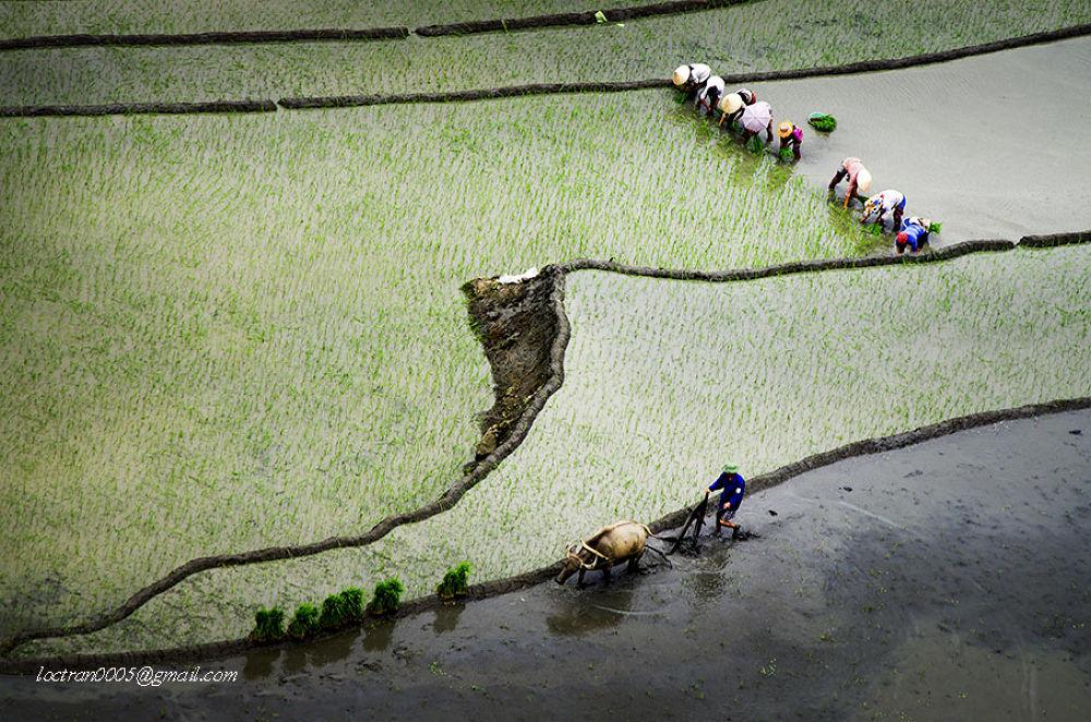Dans le champs! by loctran0005