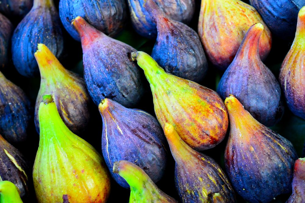 Luscious Ripe Figs by Stefano Zocca