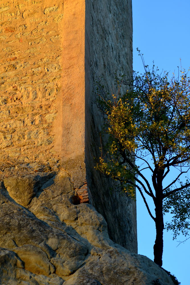 The Tower and the Tree by Stefano Zocca