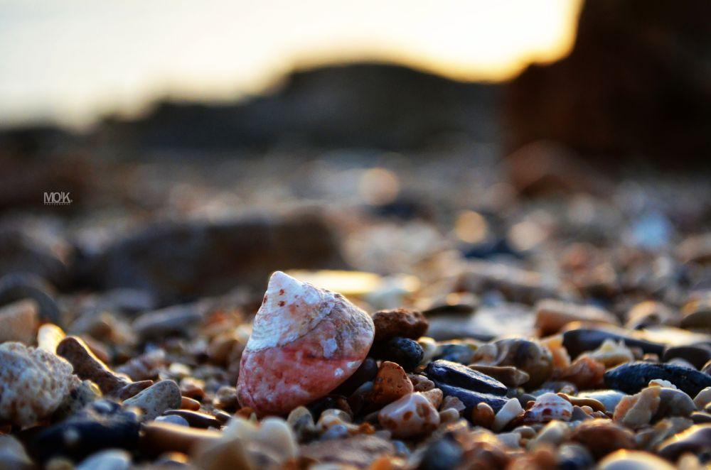 seashell by Mohammad Armalah
