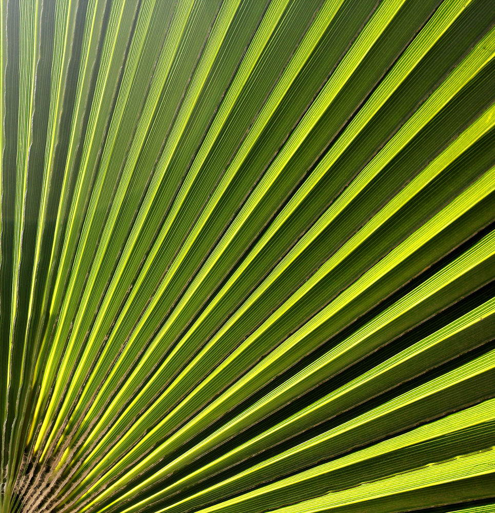 lines of leaf by Mohammed A.Abdulkhaliq