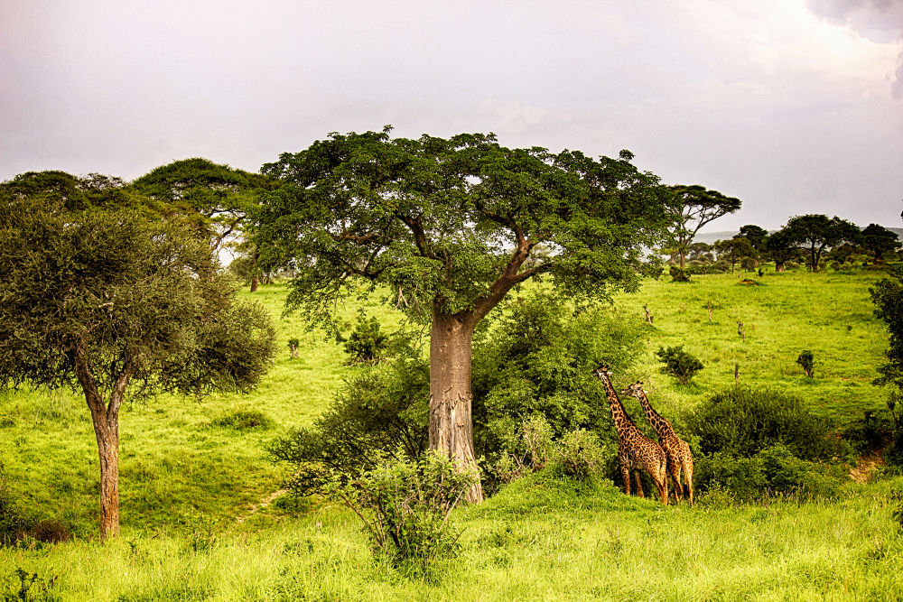 Tanzania. by mountaingoat