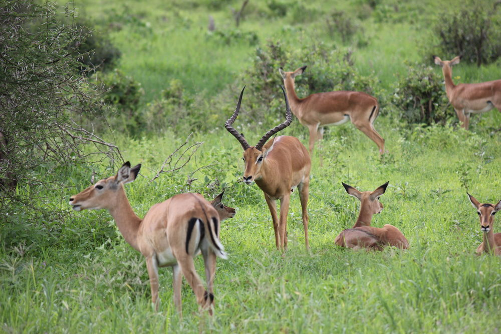 African Wildlife. by mountaingoat