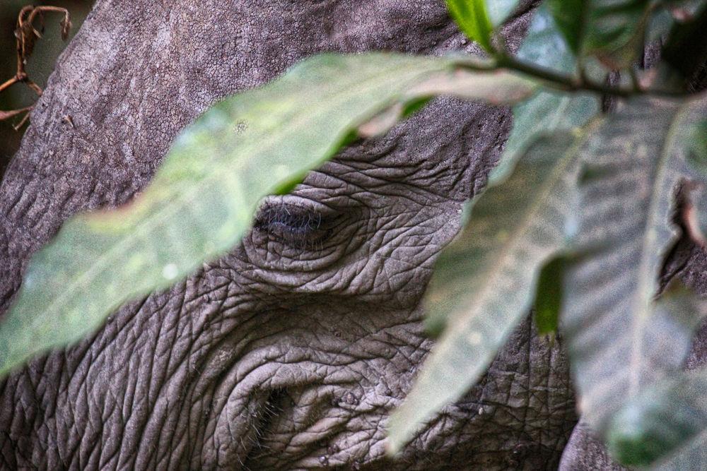 Hiding Elephant. by mountaingoat