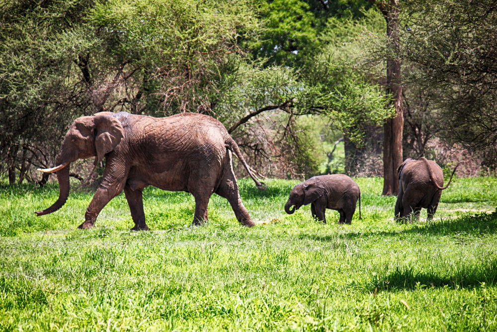 Proud Parent In Tanzania. by mountaingoat