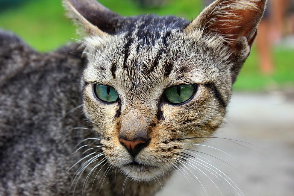cat by ading kuswara