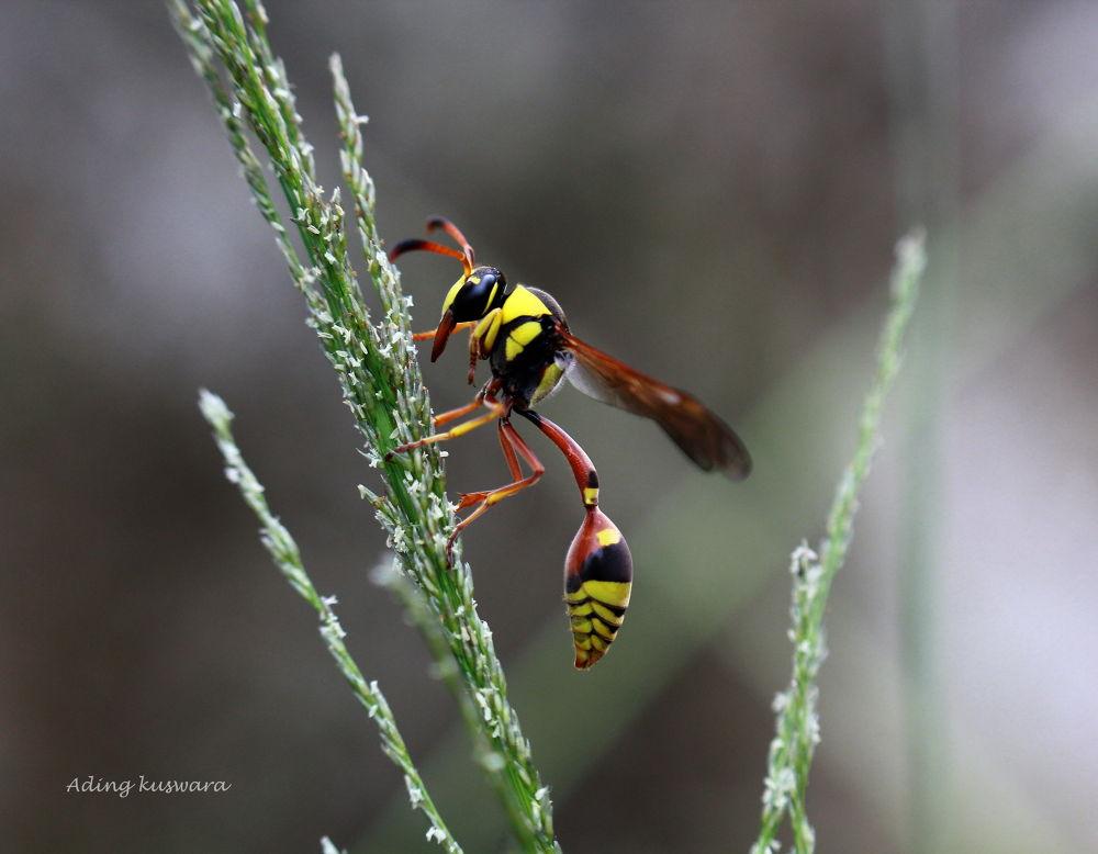 Bee by ading kuswara