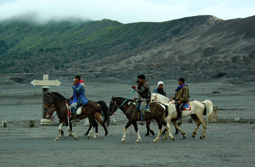 Horse for rent....(bromo mountain) by ading kuswara
