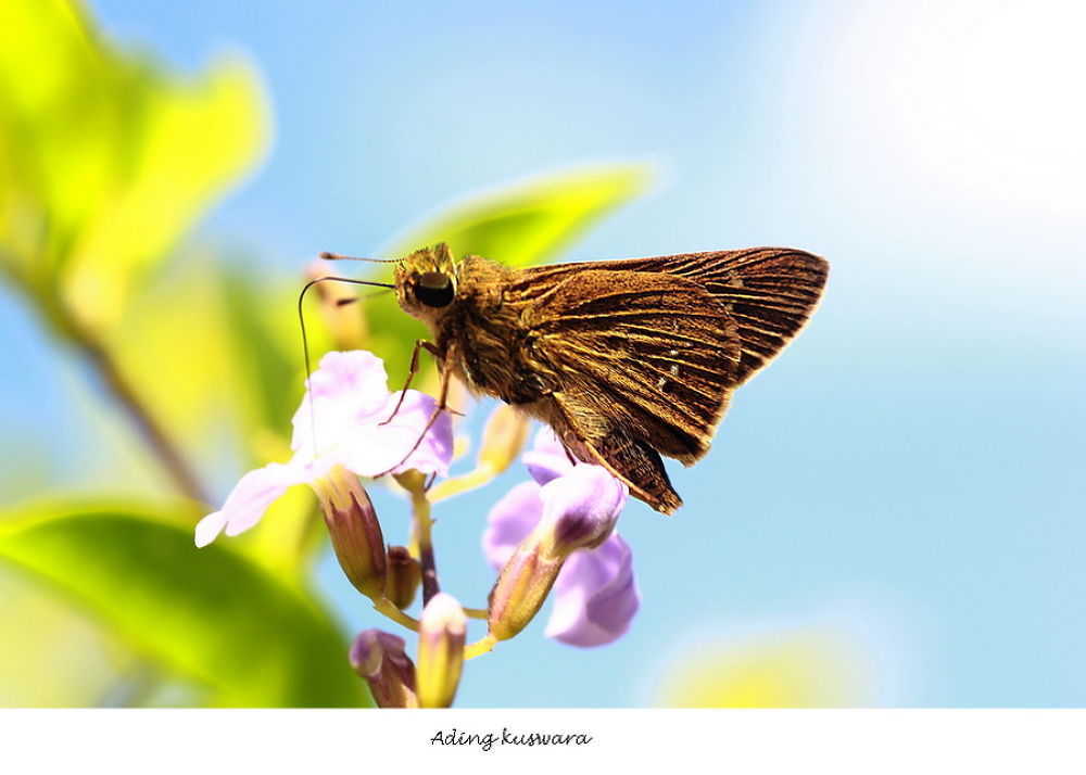 small butterfly by ading kuswara