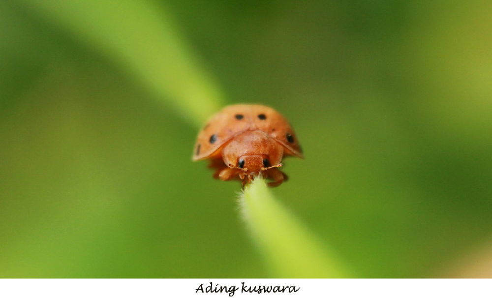 alone by ading kuswara