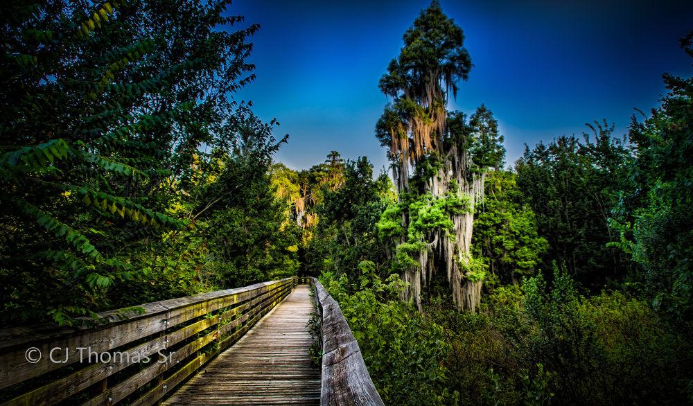 Natural Florida 2 by ElSenCeej