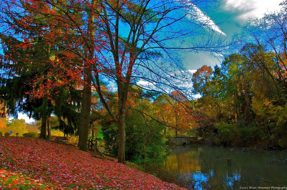 Photo in Random #trees #autumn #highlands #leaves #pond #pennsylvania #laurel #round hill