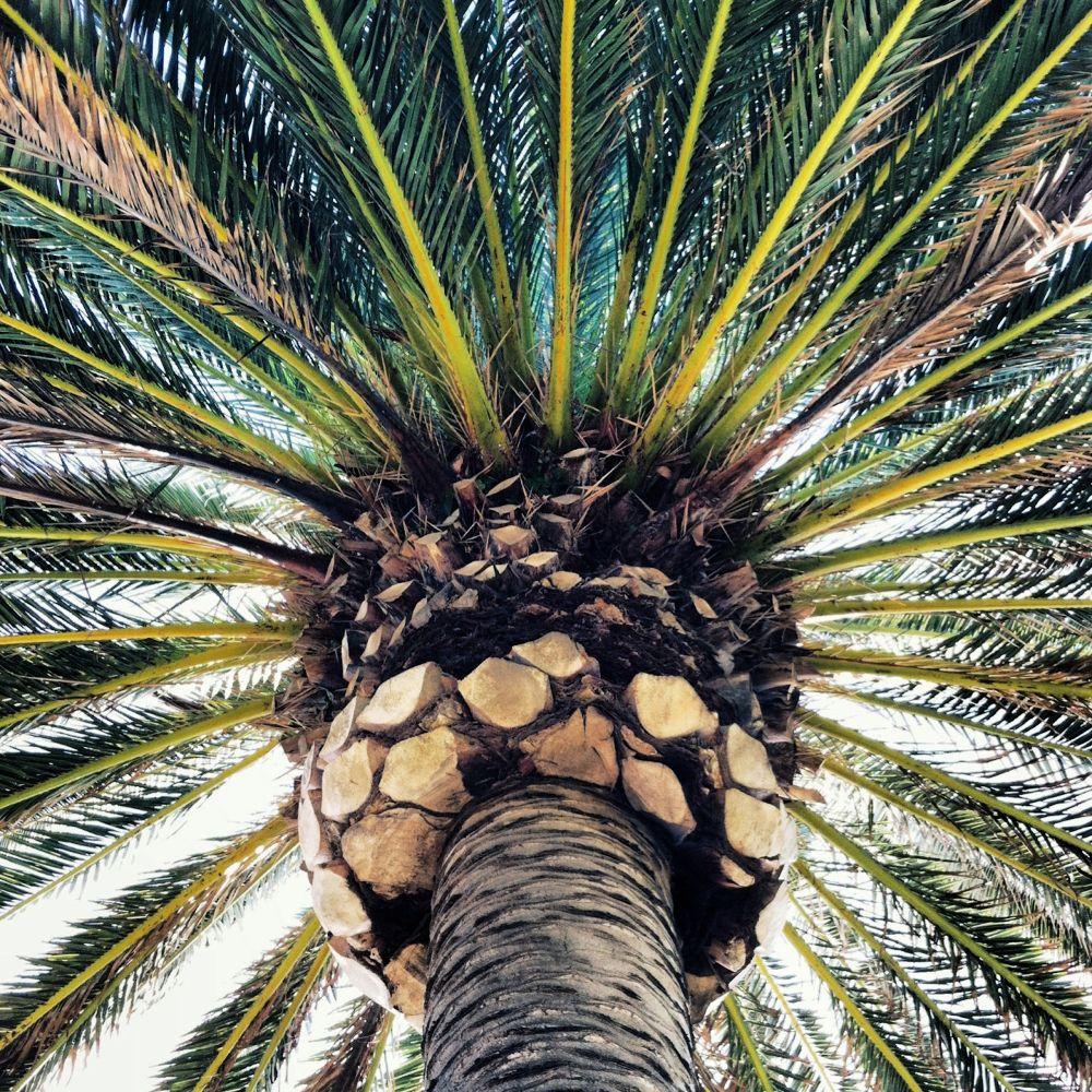 Under a Palm by carolynusa