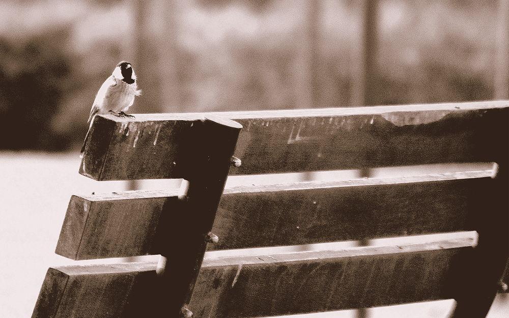 A bird in solitude by imranabhatti