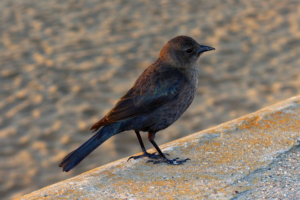 Bird on the beach by Redthistle