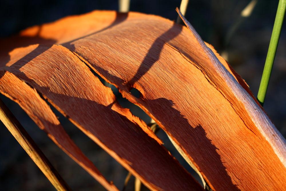 Eucalyptus Bark by Icethistle Photography