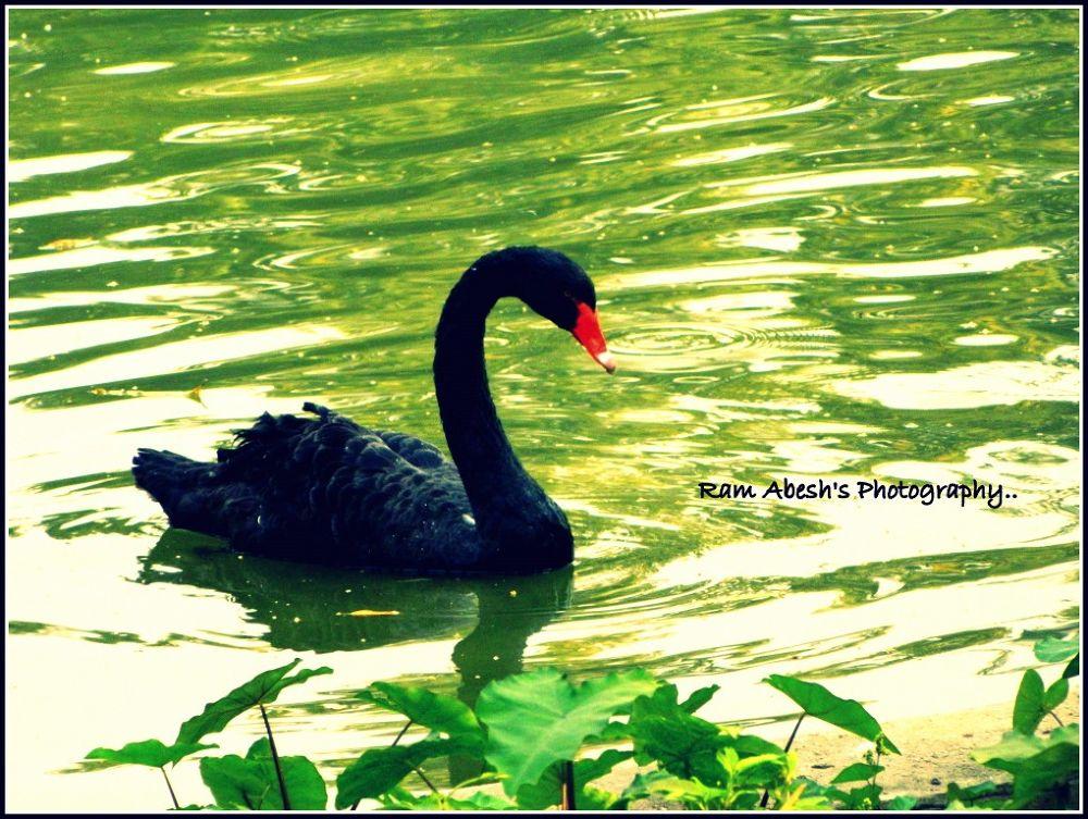black Beauty by Ram Abesh Sarkar
